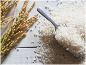 일반쌀-500g